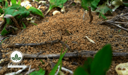 How To Get Rid Of Ant Hills